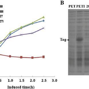 E coli research paper